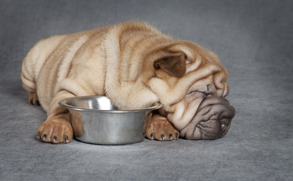 The Shar-pei dog hails from