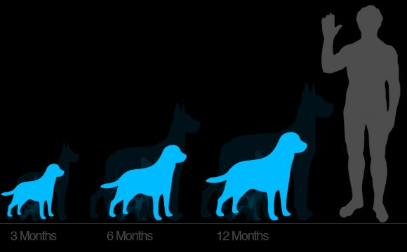 Of dog growth from puppy