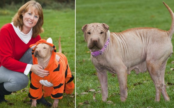 Hairless Shar Pei dog needs