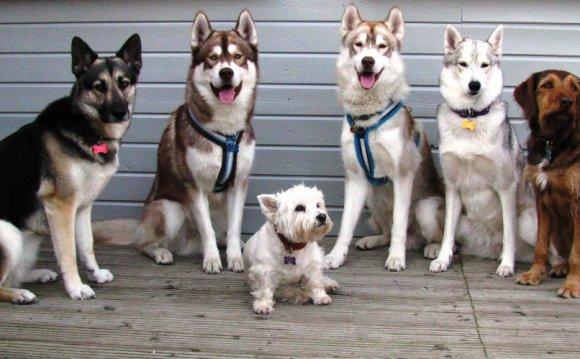 Diesel,Luna, Milly, Suki