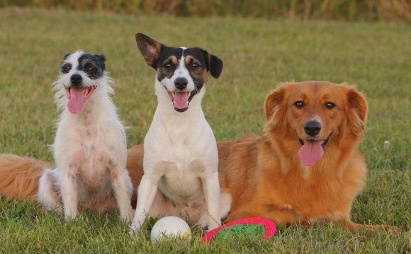 Mixed-breed-dog-names