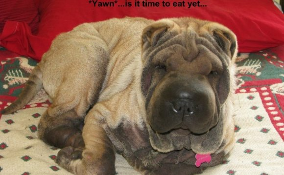 Miss Mouse - Shar Pei