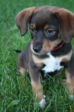 Mixed Breeds Top The List for Most Popular Dogs