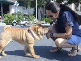 Chinese Shar Pei Club of America