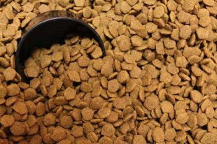 Top 5 Best Dry Dog Food for All Ages