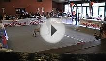 Dogdance: Faya the most special Shar-Pei of the year 2010