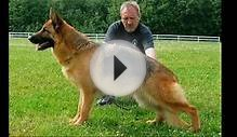 Top 10 GUARD DOGS in the world 2015 - 2