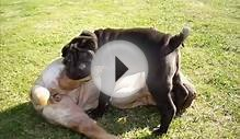 .kynon.gr - SHAR-PEI fighting lessons from MAGNA to KIVELY