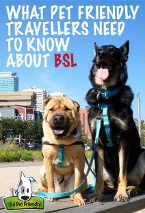 What Pet Friendly Travelers Need to Know about Breed Specific Laws