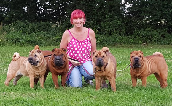 Shar PEI Breeders UK
